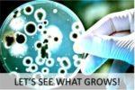 bacteria-growing-kit
